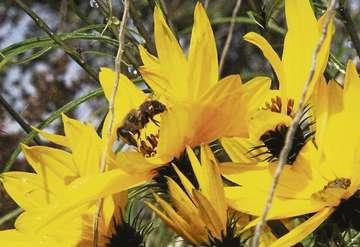 Bienen in Gefahr