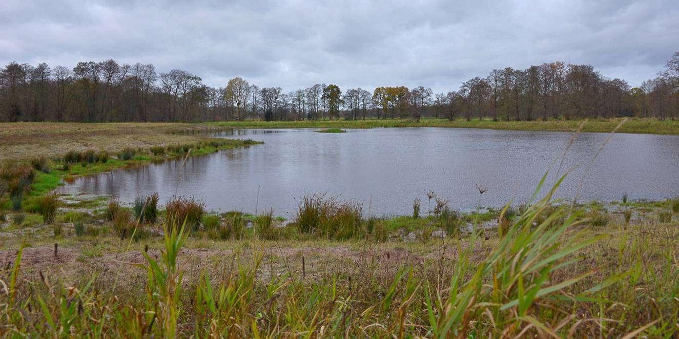 Naturnahes Regenrückhaltebecken geplant, ein Kleinod geschaffen. Und ein Ort mit Hecken und Blühwiesen, der einen Ausflug lohnt. Foto: Joachim Looks