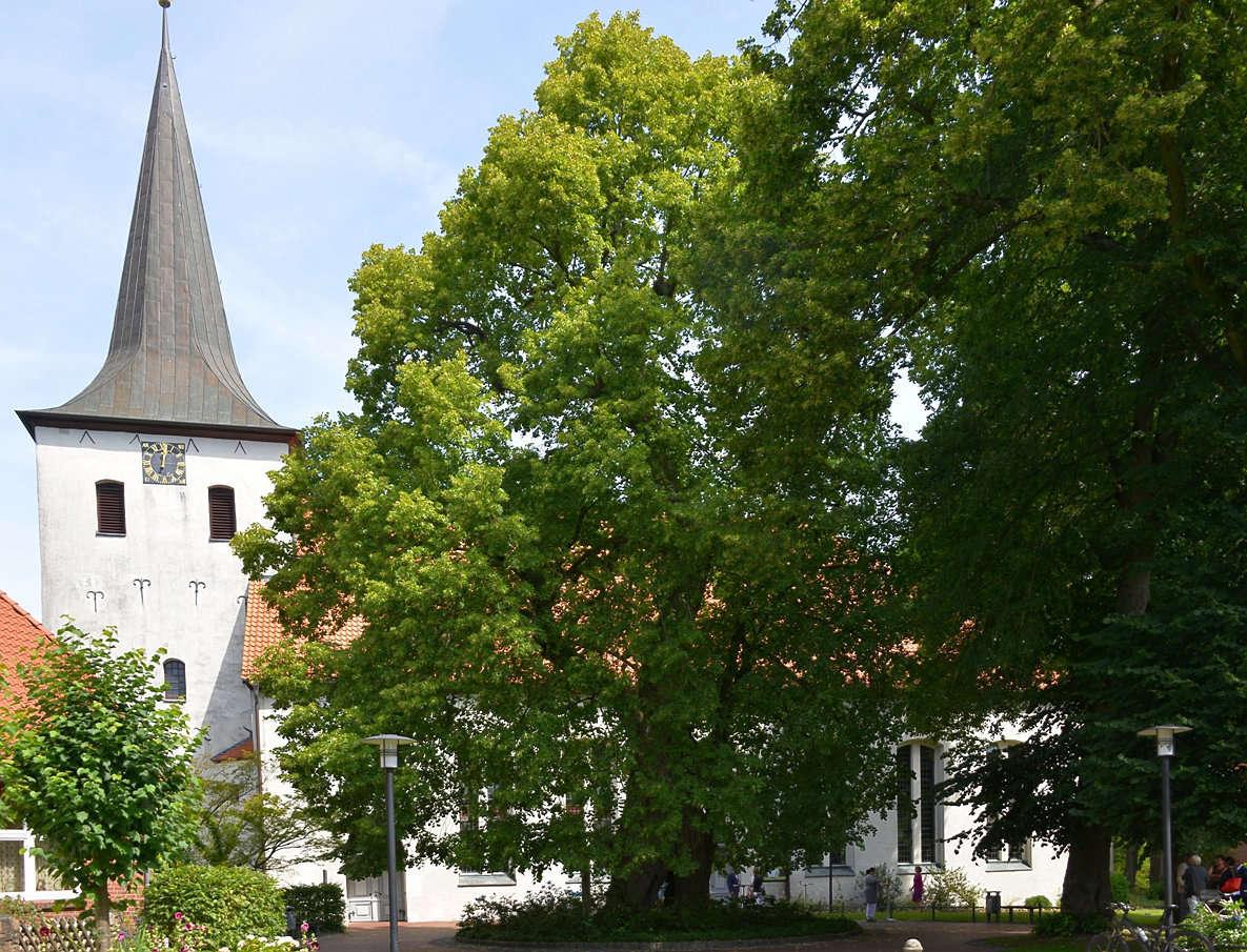 Natürlicher Schatz im Ortsmittelpunkt: Die Winterlinde vor der Scheeßeler St.-Lucas-Kirche ist eine der ältesten Gerichtslinden in Deutschland. Foto: Joachim Looks