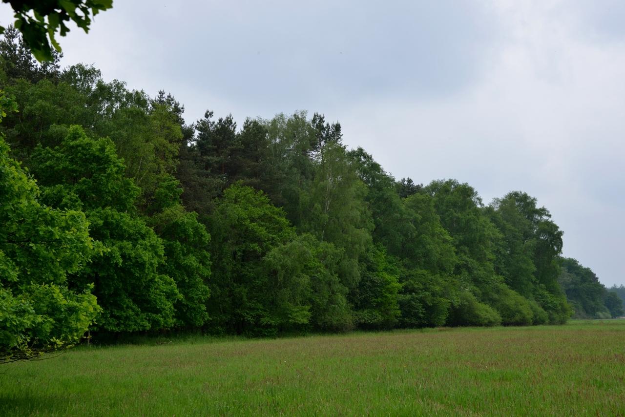 Waldränder, wie hier an der Wümmeniederung, bieten Schutz. Foto: Joachim Looks