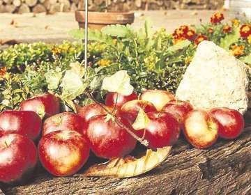 Am Sonntag wird Wilstedt wieder zum kulinarischen Mittelpunkt