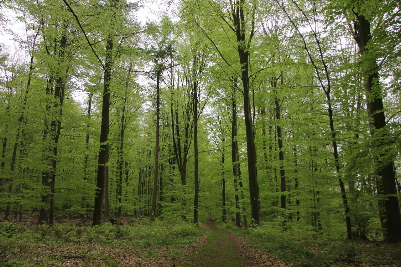Grün, überall ist es Grün im Wald bei Kuhmühlen. Foto: Nina Baucke