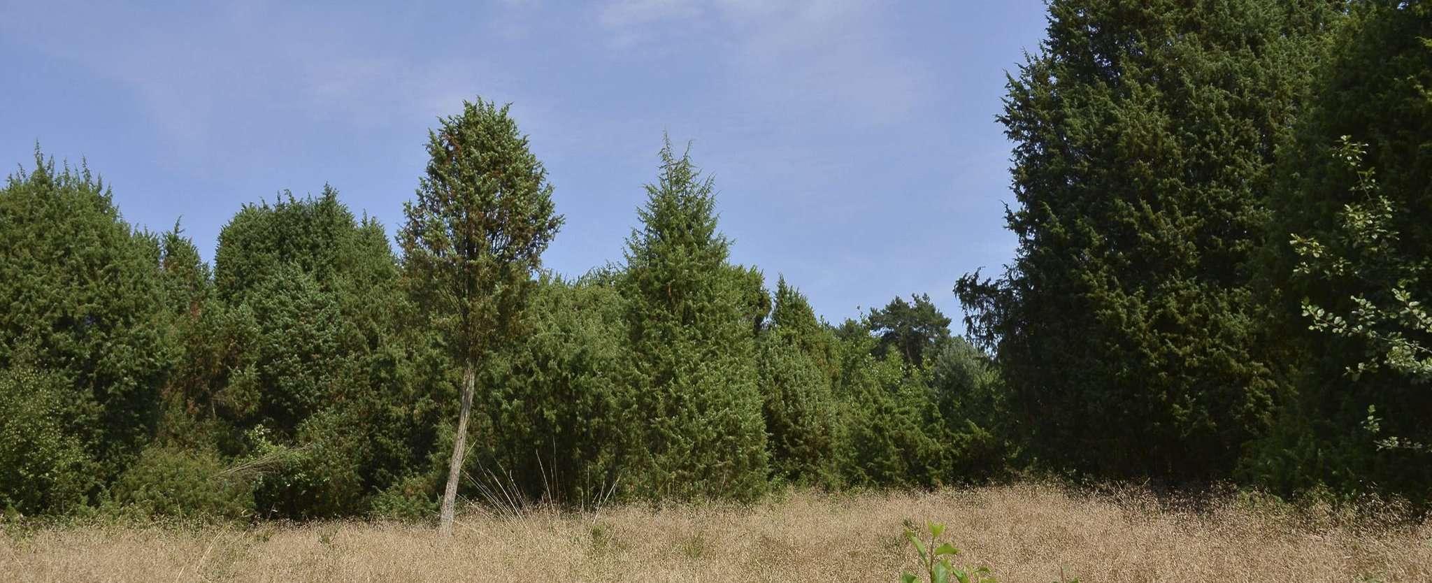 Westerescher Wacholderpark in der Sommersonne. Foto: Joachim Looks