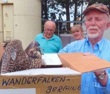 Von Scheinwaisen und Ästlingen in der Vogelkinderstube