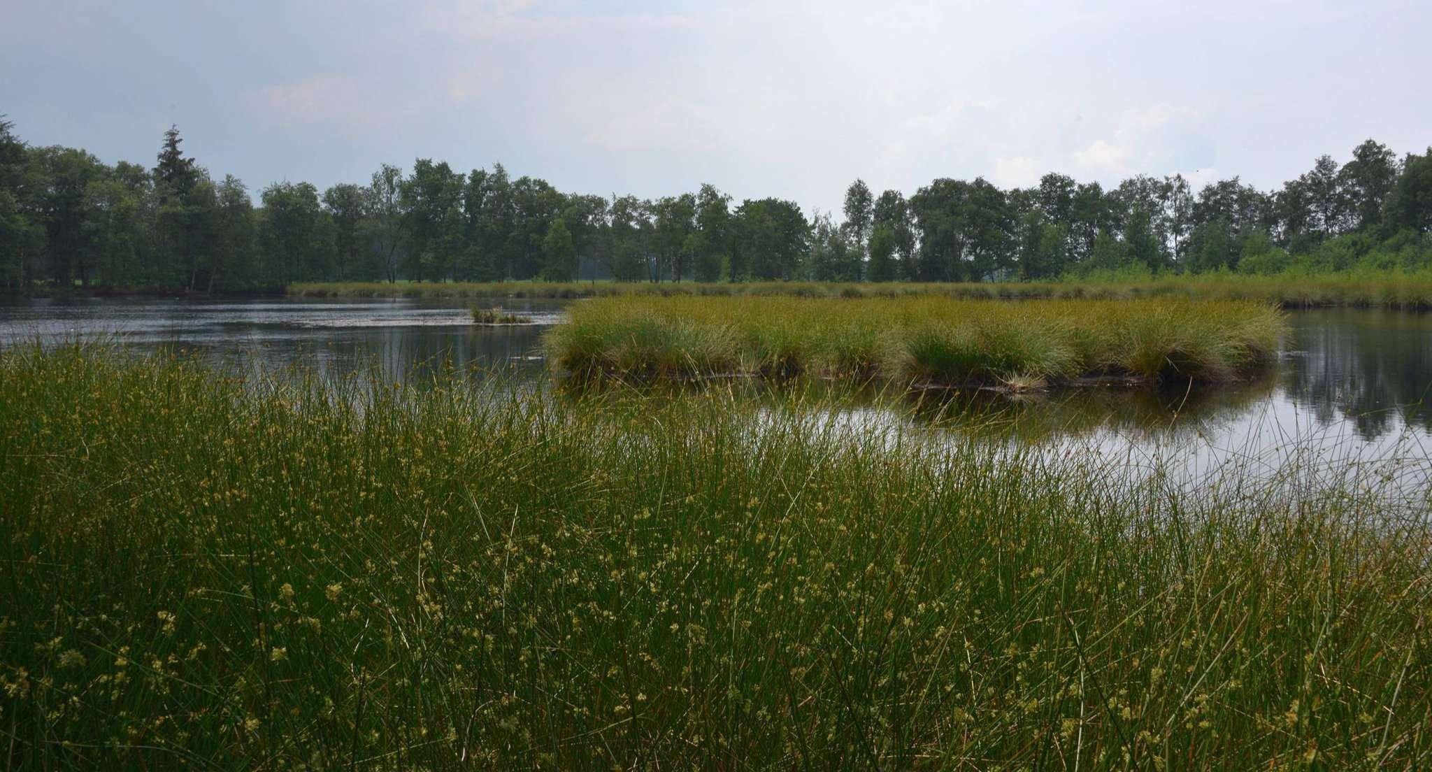 Landschaftsschutzgebiet See im Stell bei Lauenbrück. Foto: Joachim Looks