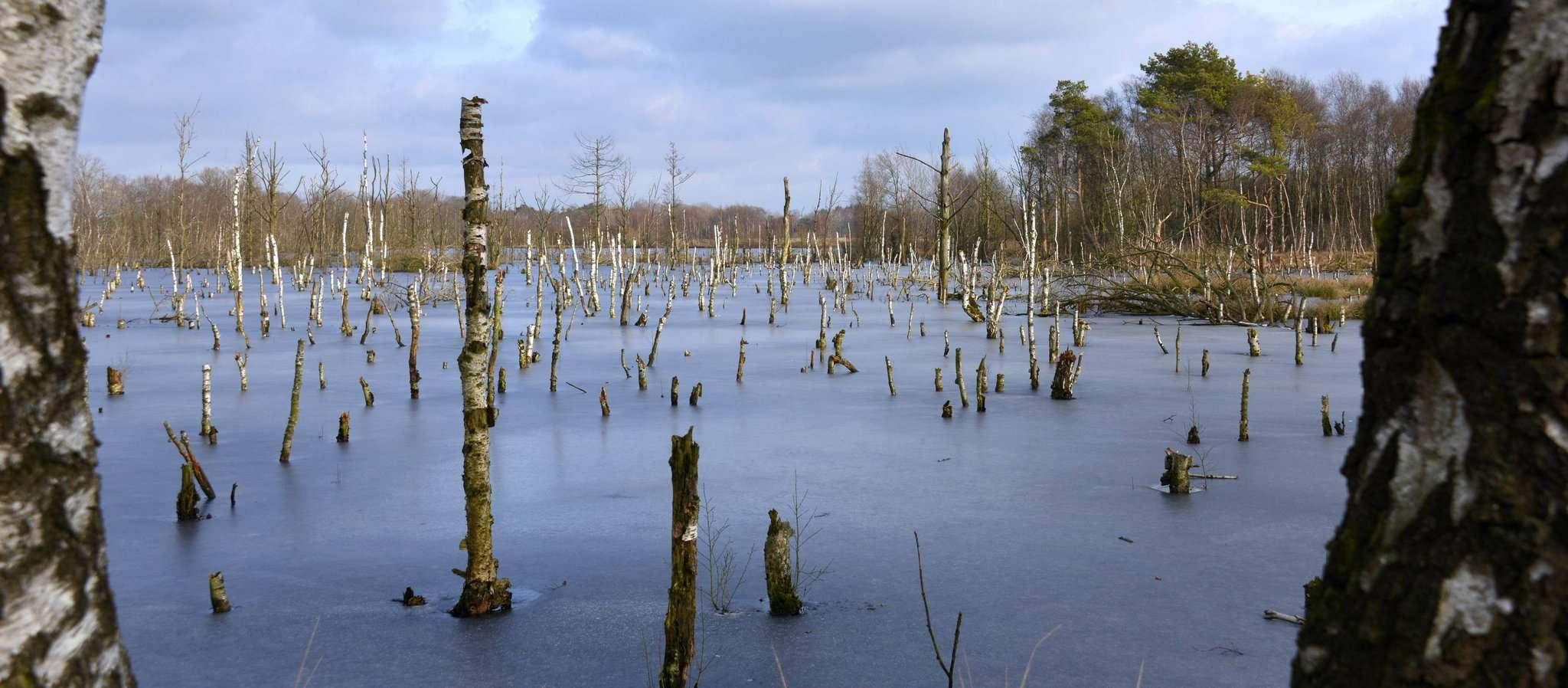 Das Hohe Moor ist eine über rund 6.000 Jahre aus Torfmoosen gewachsene Landschaft. Erst vor gut 200 Jahren entdeckten die Menschen das Moor für sich. Foto: Joachim Looks