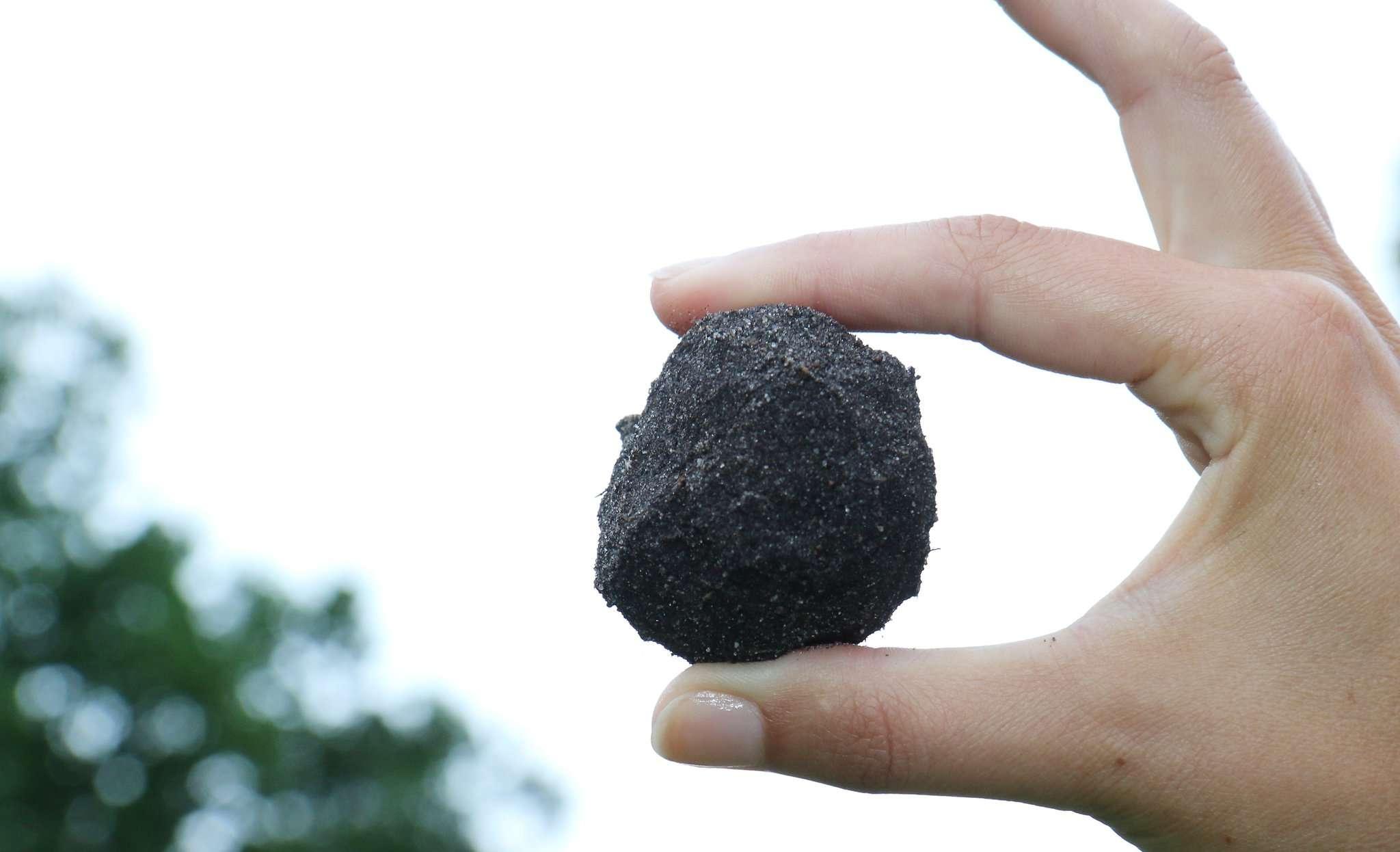 Welche gesundheitsschädlichen Stoffe verbergen sich im Boden? Untersuchte Pilze wiesen zumindest keine Auffälligkeiten auf. Archivfoto: Dennis Bartz