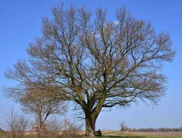 Naturdenkmäler im Landkreis Rotenburg im Wandel der Zeit  Von Christiane Looks