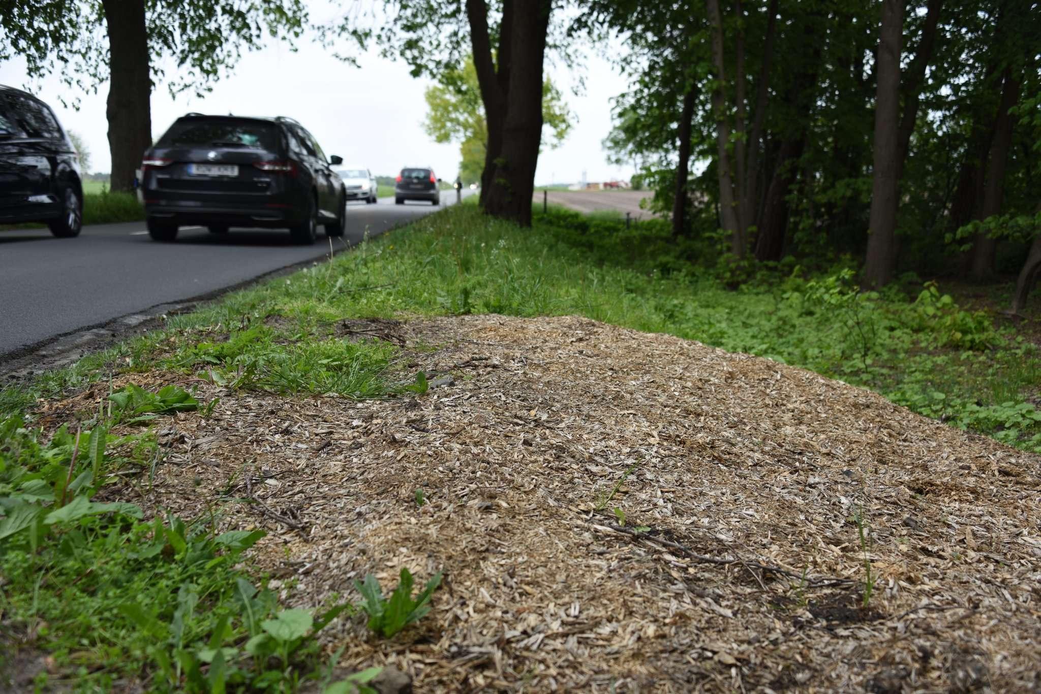 Wo einmal ein Baum stand: Wie entlang der Kreisstraße von Reeßum nach Taaken habe der Landkreis unverhaltnismäßig viele Bäume gefällt, beklagt der BUND. Foto: Andreas Schultz