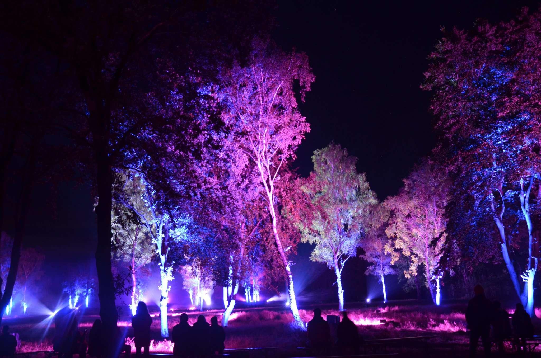 Das Heidezauber-Gelände in Schneverdingen leuchtet fünf Nächte lang in den buntesten Farben. Das Rahmenprogramm sorgt zudem für kulturelle Unterhaltung.