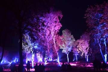 2 bis 6 Oktober Der Heidezauber lockt mit nächtlicher Farbe nach Schneverdingen