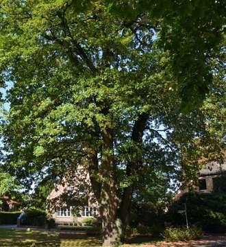 Baum als Stimmungsträger Vom Wert des Ungewöhnlichen  Von Christiane Looks