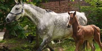 Vom Vater gelernt Andreas Schnackenberg und die Pferdezucht  Von Elke KepplerRosenau