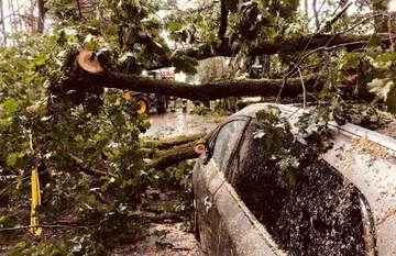 Windhose bringt zwischen Bothel und Hemsbünde Bäume zu Fall  Von Nina Baucke