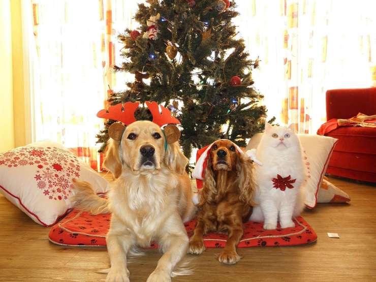 Santa Animals