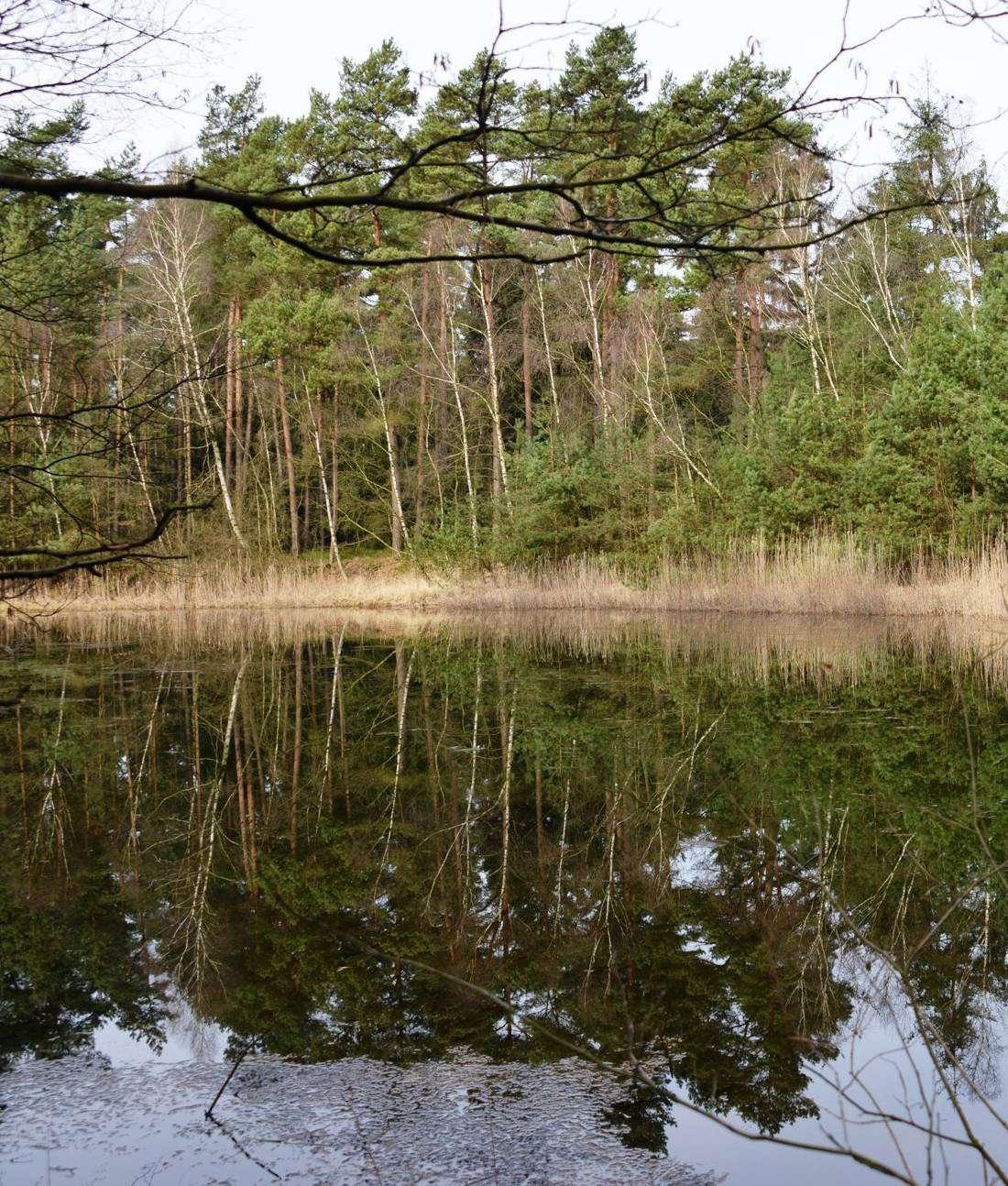 Der Silbersee im Trochel ist ein sehenswertes Sekundärbiotop. Foto: Joachim Looks