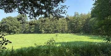 Selbstoptimierung und Vegetation als kühlendes Flächenelement  Von Christiane Looks