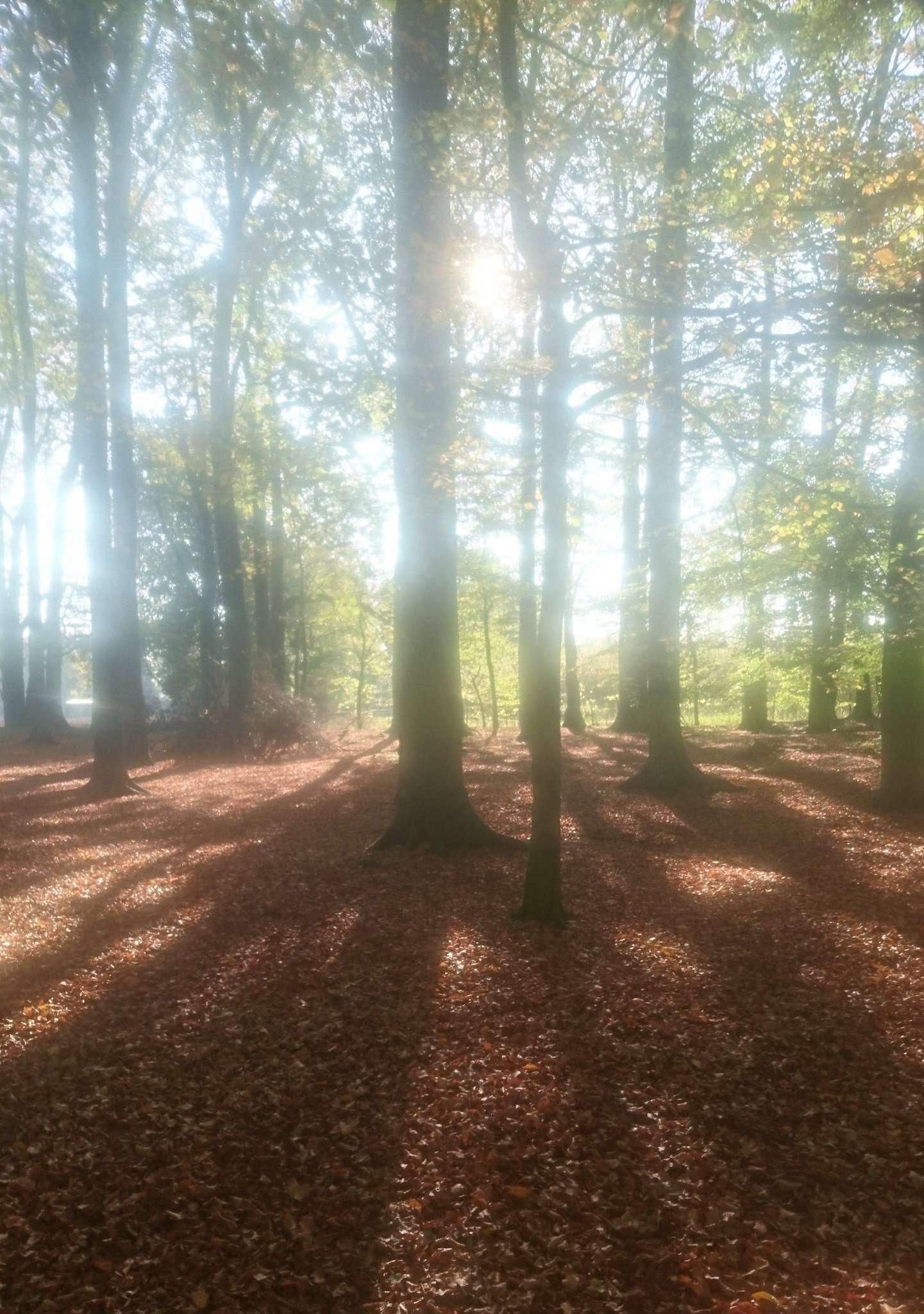 Heino Peters möchte den Schulwald für die Öffentlichkeit erhalten. Foto: Jens Lou00ebs