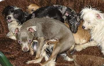14 Hunde herzlos entsorgt