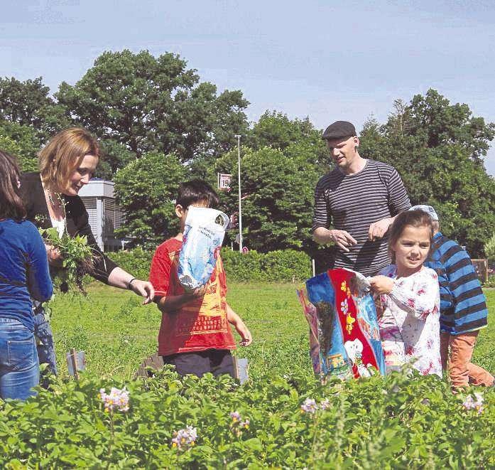 Schüler der Schule am Grafel pflegten ihre selbst gepflanzten Bio-Kartoffeln. Das Projekt auf einem Acker der Kalandshof-Gärtnerei wurde vom Umweltbildungszentrum Wümme (UBZ) initiiert.