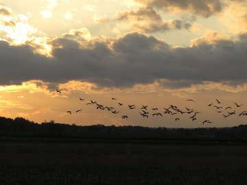 Vögel des Glücks rasten im Breddorfer und Tister Moor  Von Elke KepplerRosenau