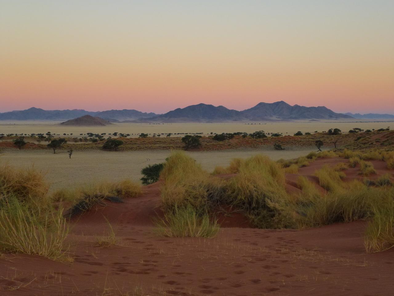 Keine Angst vor wilden Tieren: Wiebke Lehmitz begegnet auf ihren Touren durch das Land unter anderem Löwen und Giraffen.