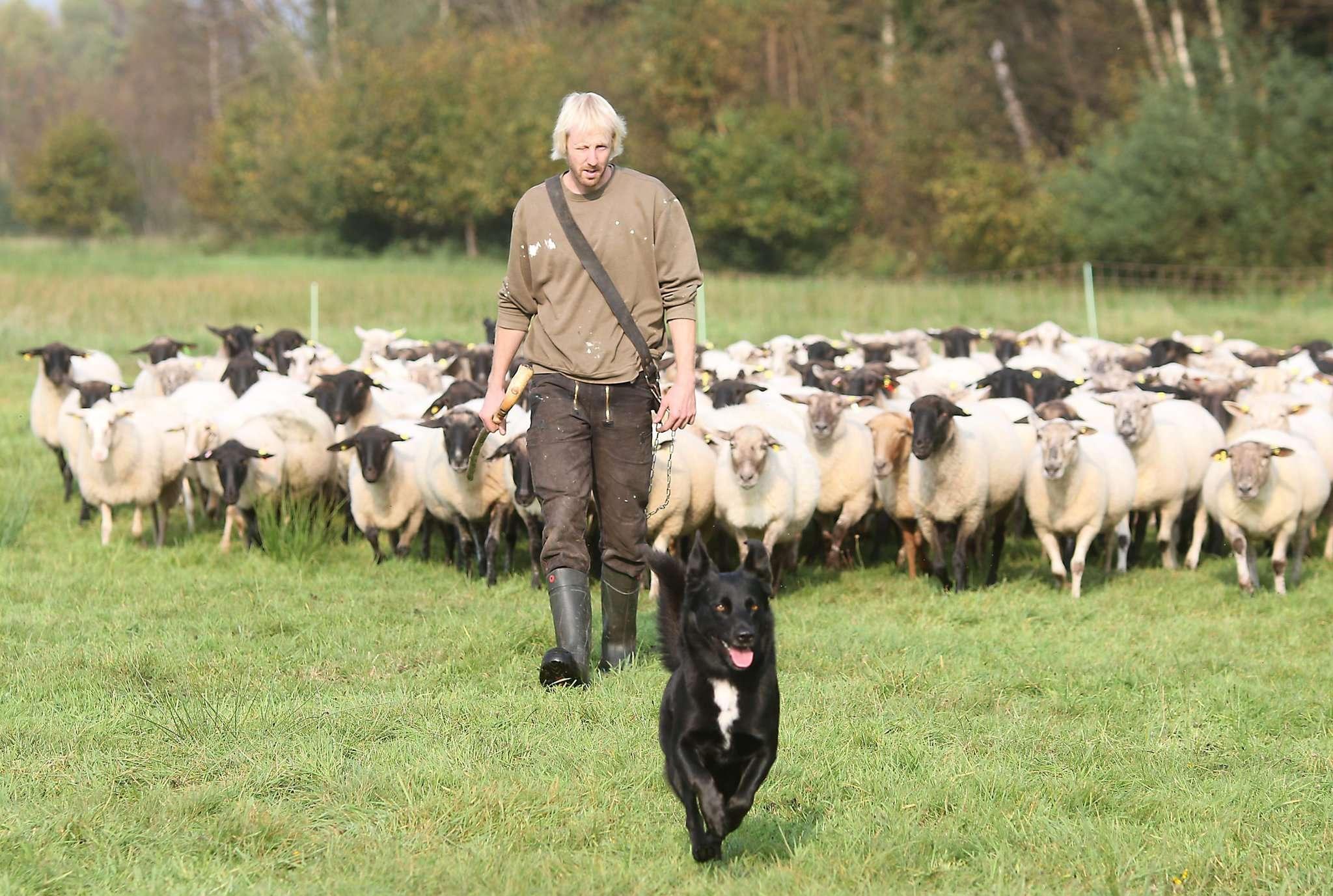 Marco Hörmann hat 200 Schafe und organisiert einen Border Collie-Trial.