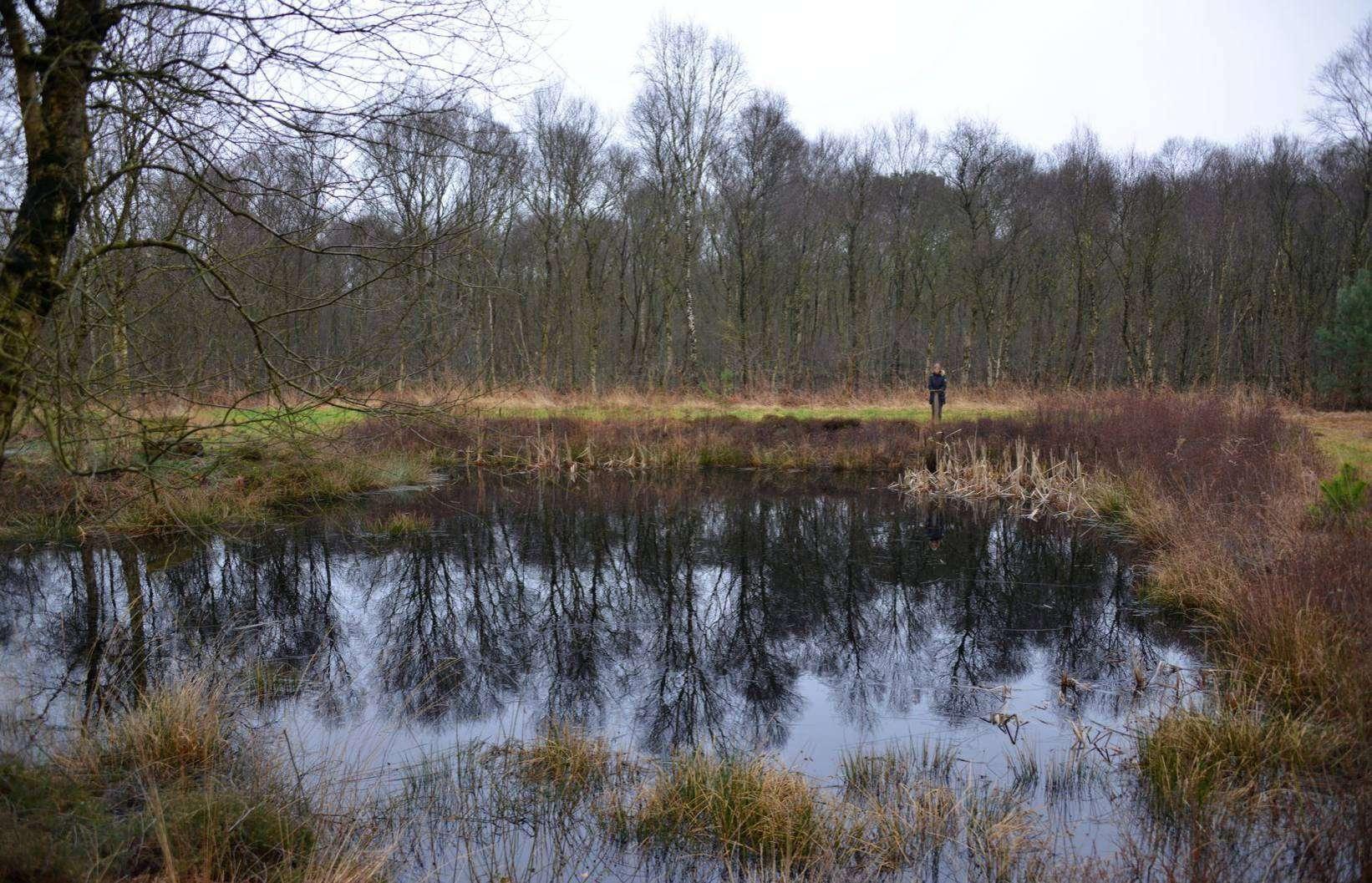 Im Tarmstedter Moor. Foto: Joachim Looks