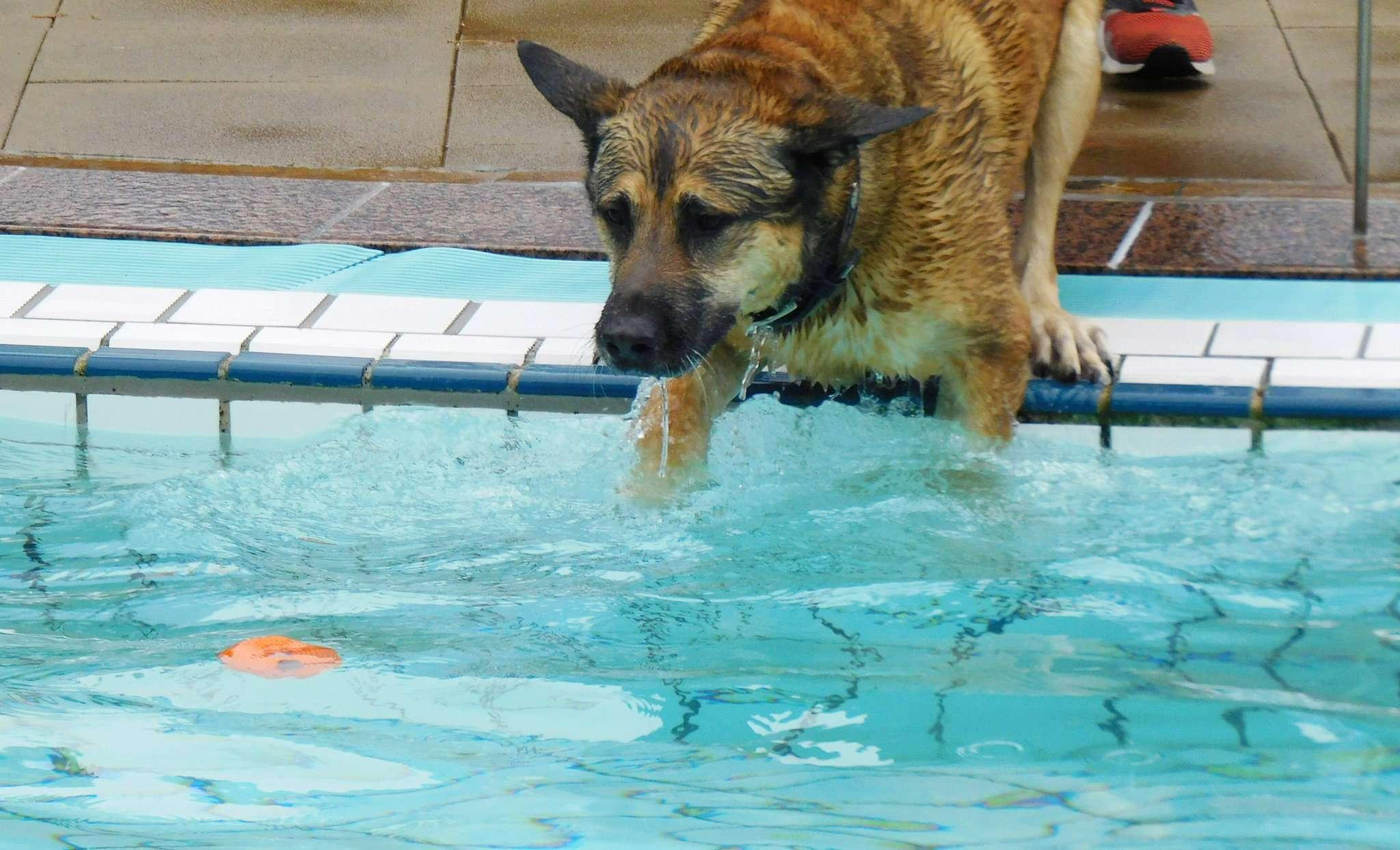 Es nutzt nichts: Wer den Ball aus dem Wasser fischen will, muss selbst den Sprung hinein wagen.