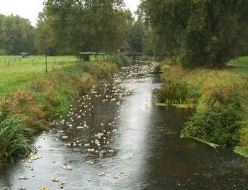 Entenrennen in Rotenburg