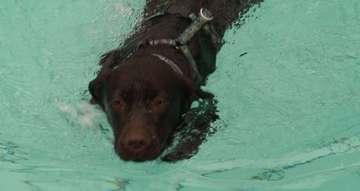 AbBaden mit Hund im Ronolulu lockt zahlreiche Gäste an