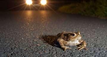 Nabu Rotenburg bittet um Rücksicht vor Amphibien