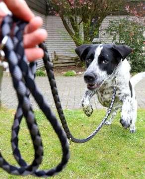 Hunde müssen an die Leine