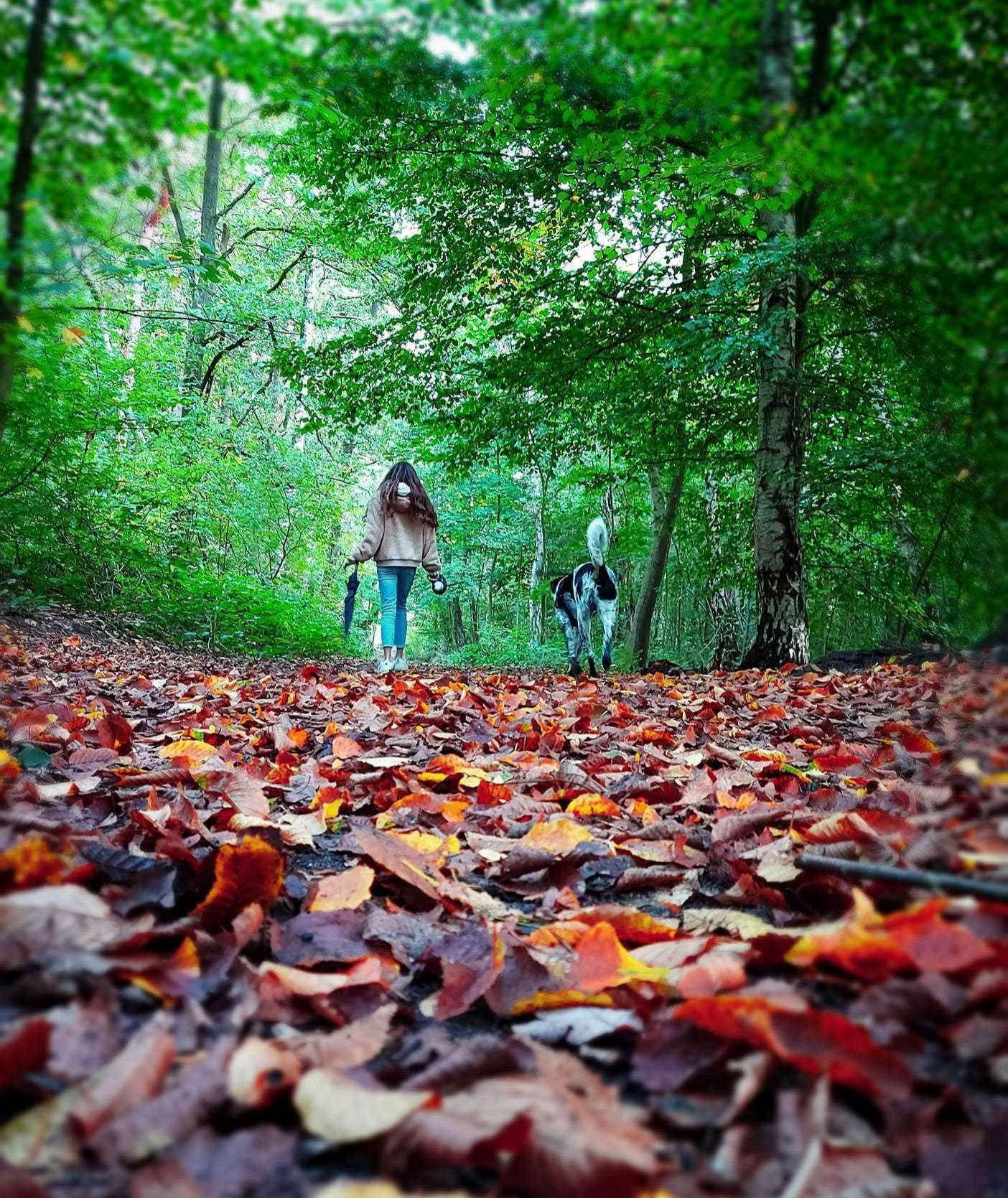 Der Herbst sorgt in diesen Tagen für malerische Landschaften und lädt zum Spazieren ein. Foto: Dennis Bartz