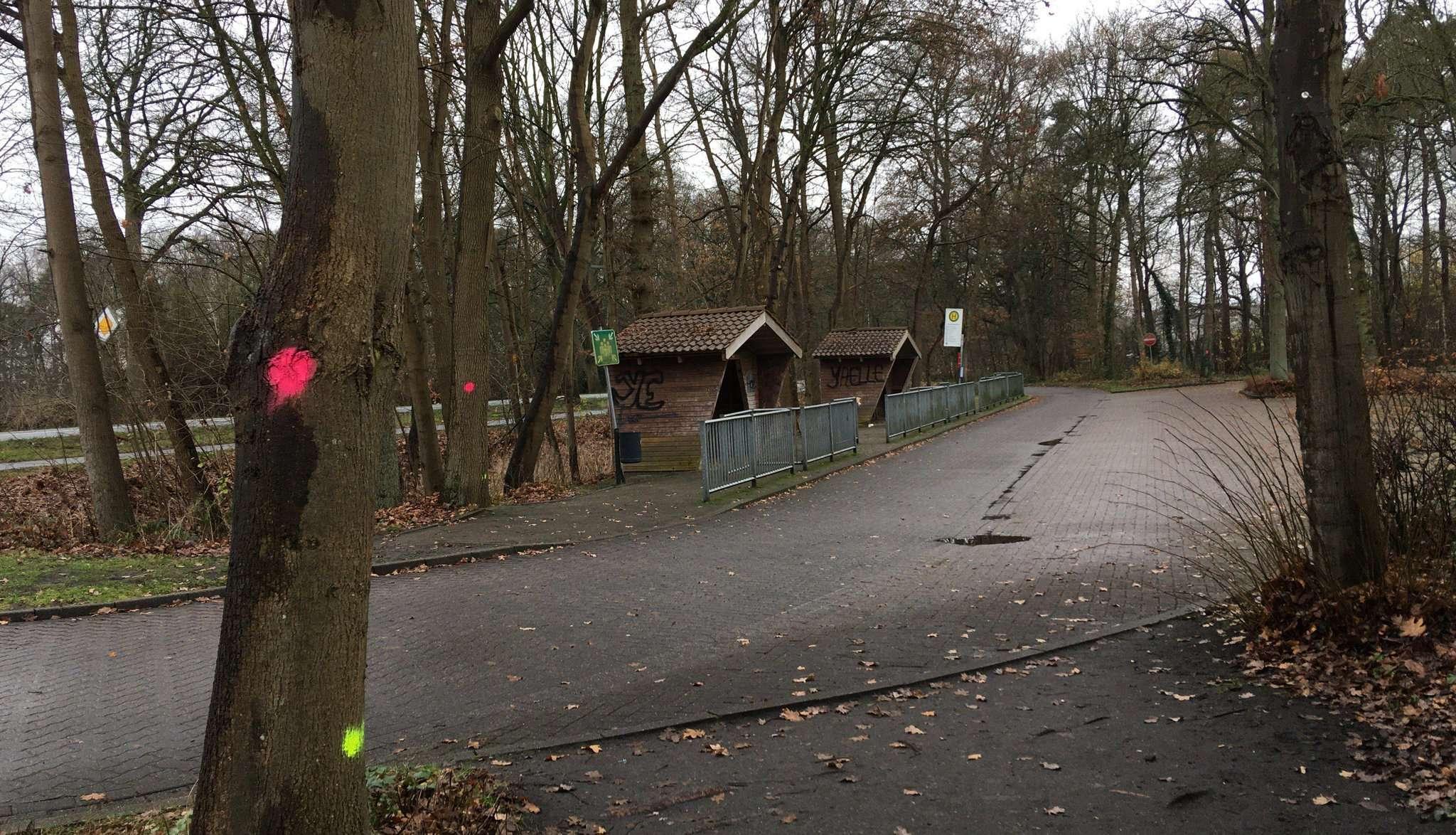 Auch für den Bau der neuen Bushaltestelle mussten Bäume weichen.