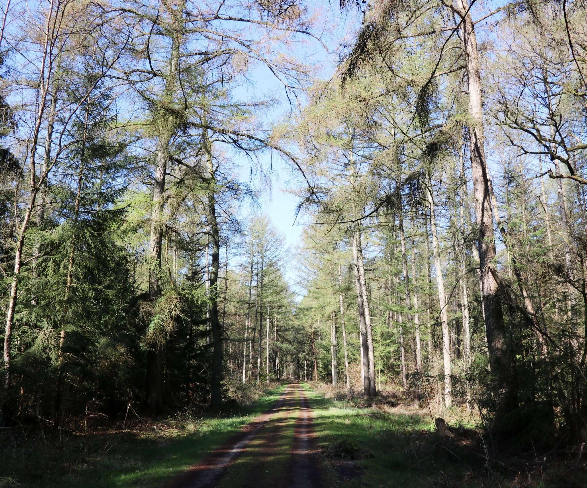 Der Blick ins Grüne allein sorgt im Wald schon für Entspannung. Und es lohnt sich, genauer hinzuschauen. Und auch einmal hinzuhören. Fotos: Nina Baucke