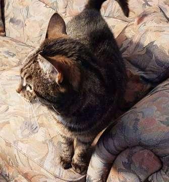 Tierhilfe Rotenburg vermittelt Katze