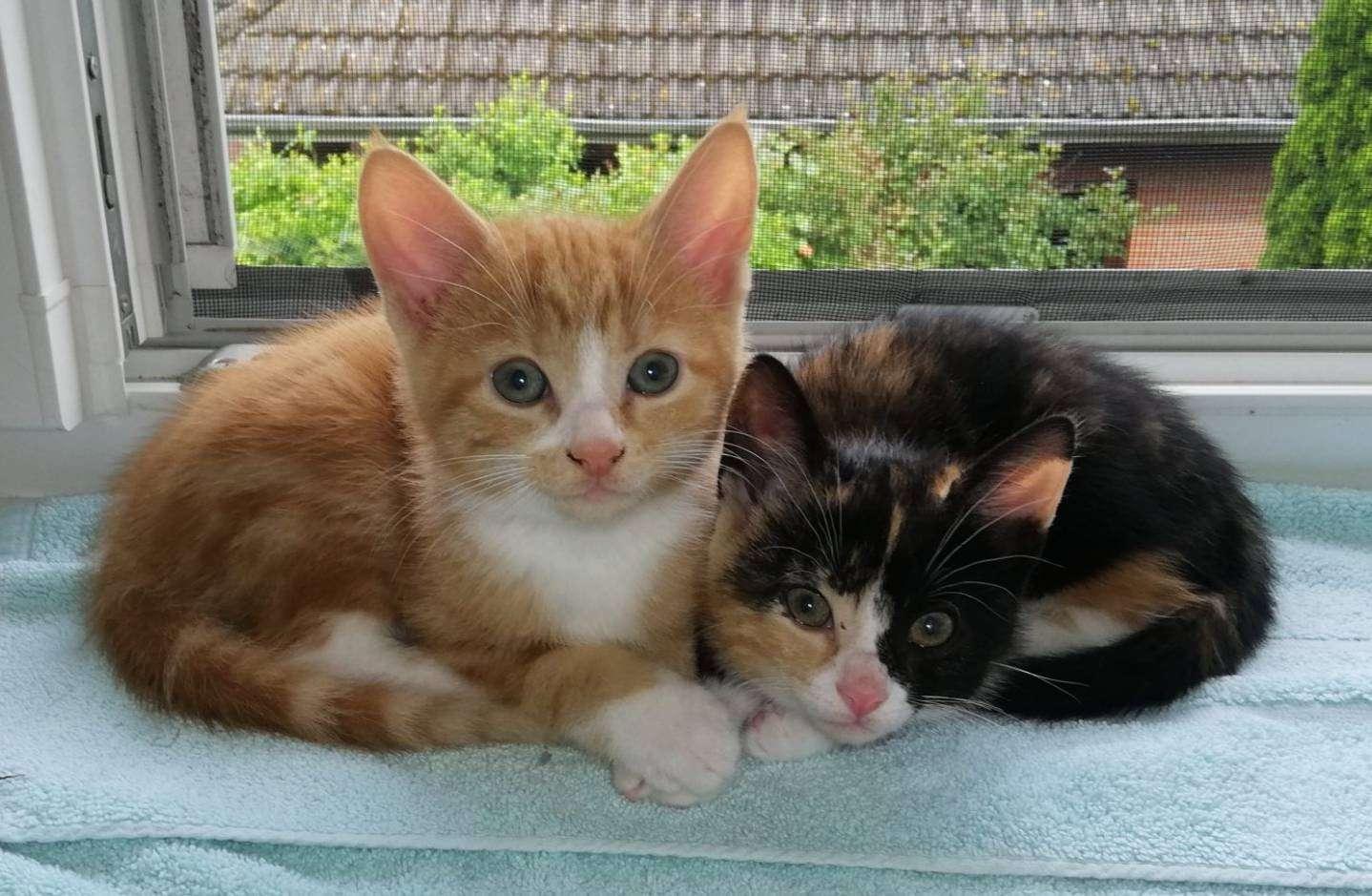 Die Geschwister Rufus und Rhianna sind in liebevolle Hände abzugeben, genau wie ihre vier Geschwister.