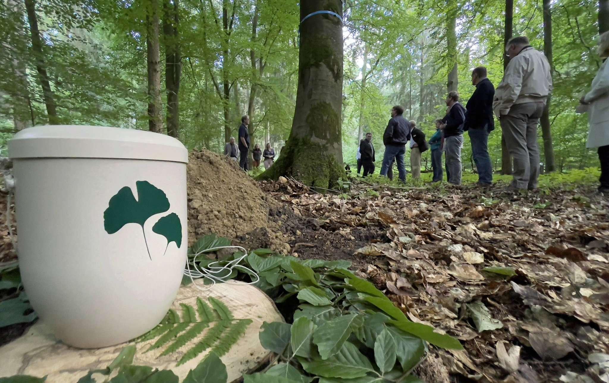 Beim Ortstermin der Ausschussmitglieder steht eine Friedwald-Urne unter einem Baum u2013 doch einen Friedwald wird es im Lintel nicht geben. Die Mitglieder des Rates stimmen gegen den Antrag der Landesforsten. Foto: Guido Menker