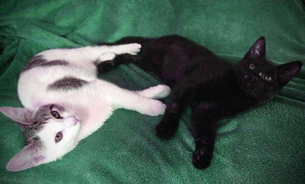 Rosza und Raven suchen ein neues Zuhause.