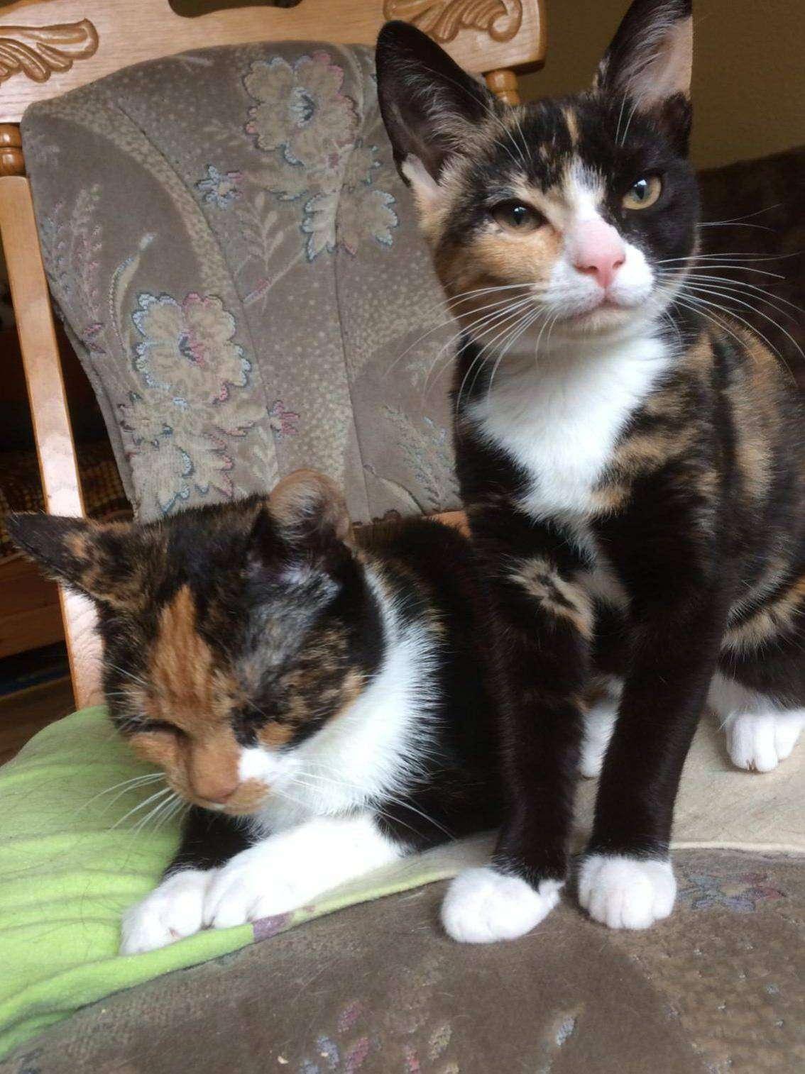 Rosanna ist die liegende hintere Katze und Rhianna die aufrecht sitzende.