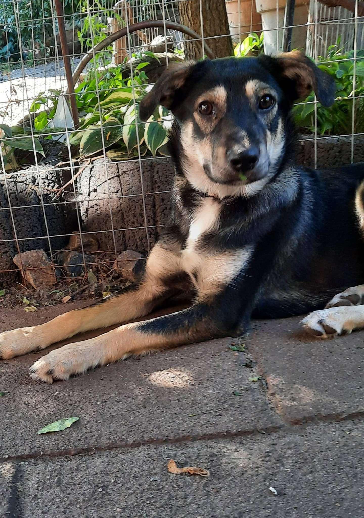 Hund Ronja sucht ein neues Zuhause.