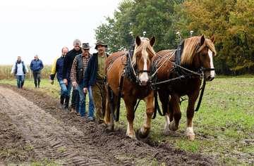 Peter Hagel gibt Kurse im Ackerpflügen mit Vierbeiner