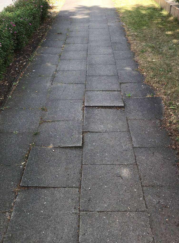 An der Bremer Straße drücken die Wurzeln die Bodenplatten hoch.