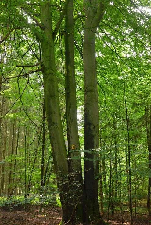 Die Mutter des Waldes