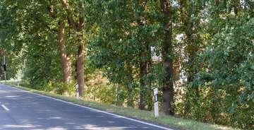 Stellungnahme der Gruppe SPDUGS zum Thema Baumfällung