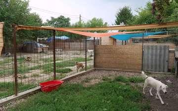 Schutzhof für Hunde Erste Spenden in Rumänien angekommen  Von AnnChristin Beims