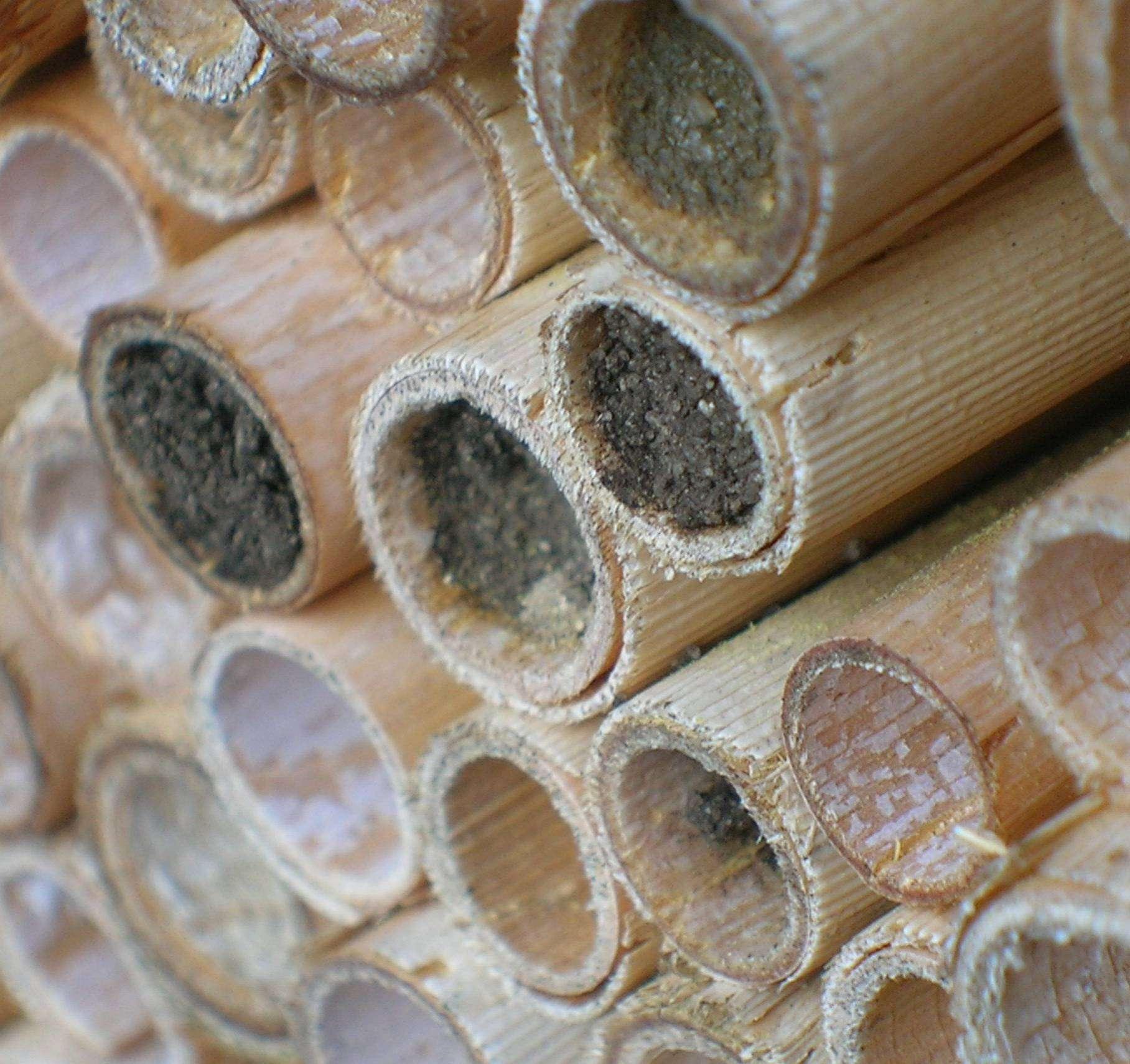 In den Röhren der Nisthilfe warten Wildbienen auf den Frühling. Foto: Schröder