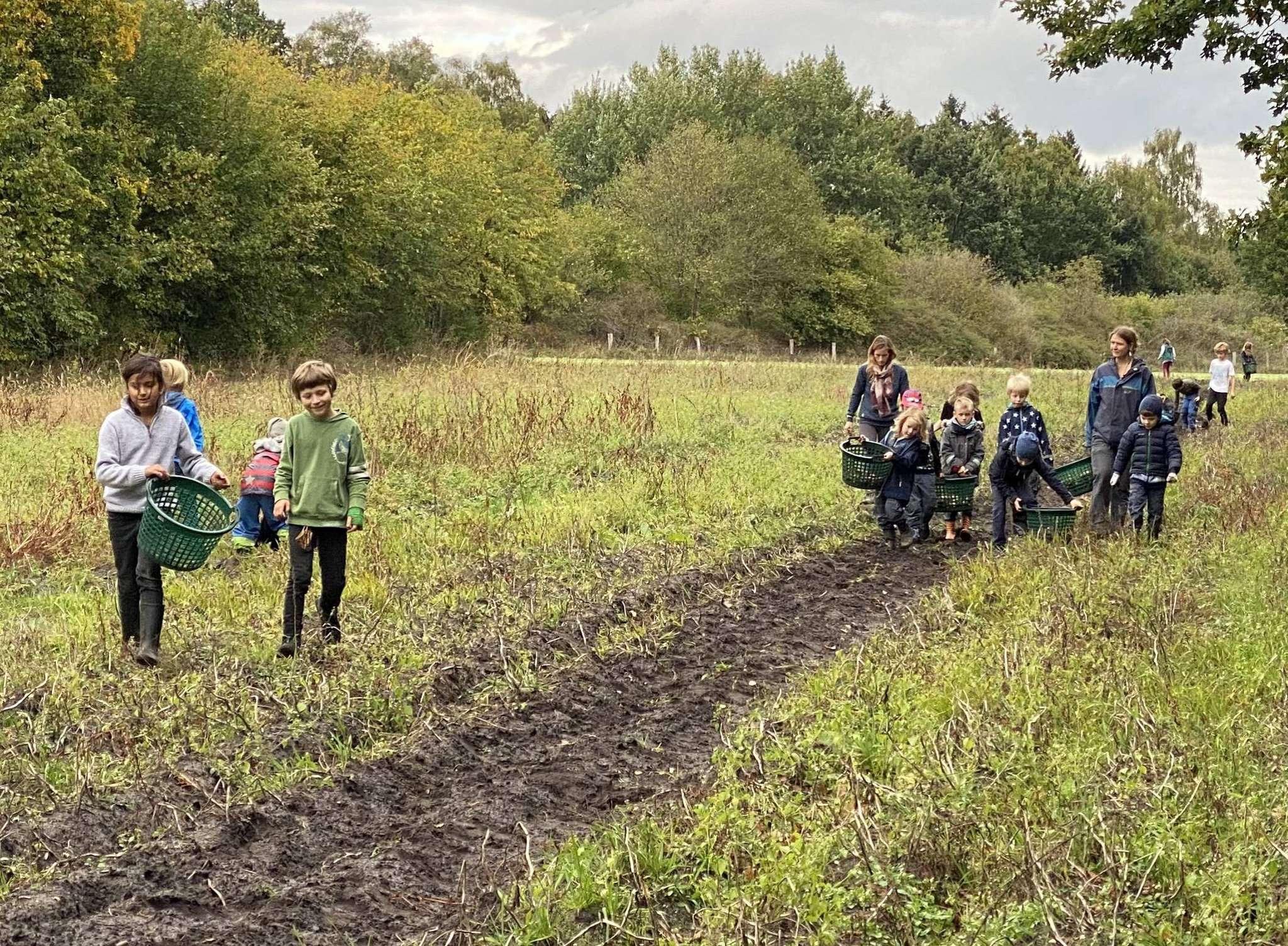 Die Kinder machten sich auf dem Feld an die Arbeit und erfuhren dabei so einiges über die Kartoffel. Foto: Alina Lyuleeva-Husemann