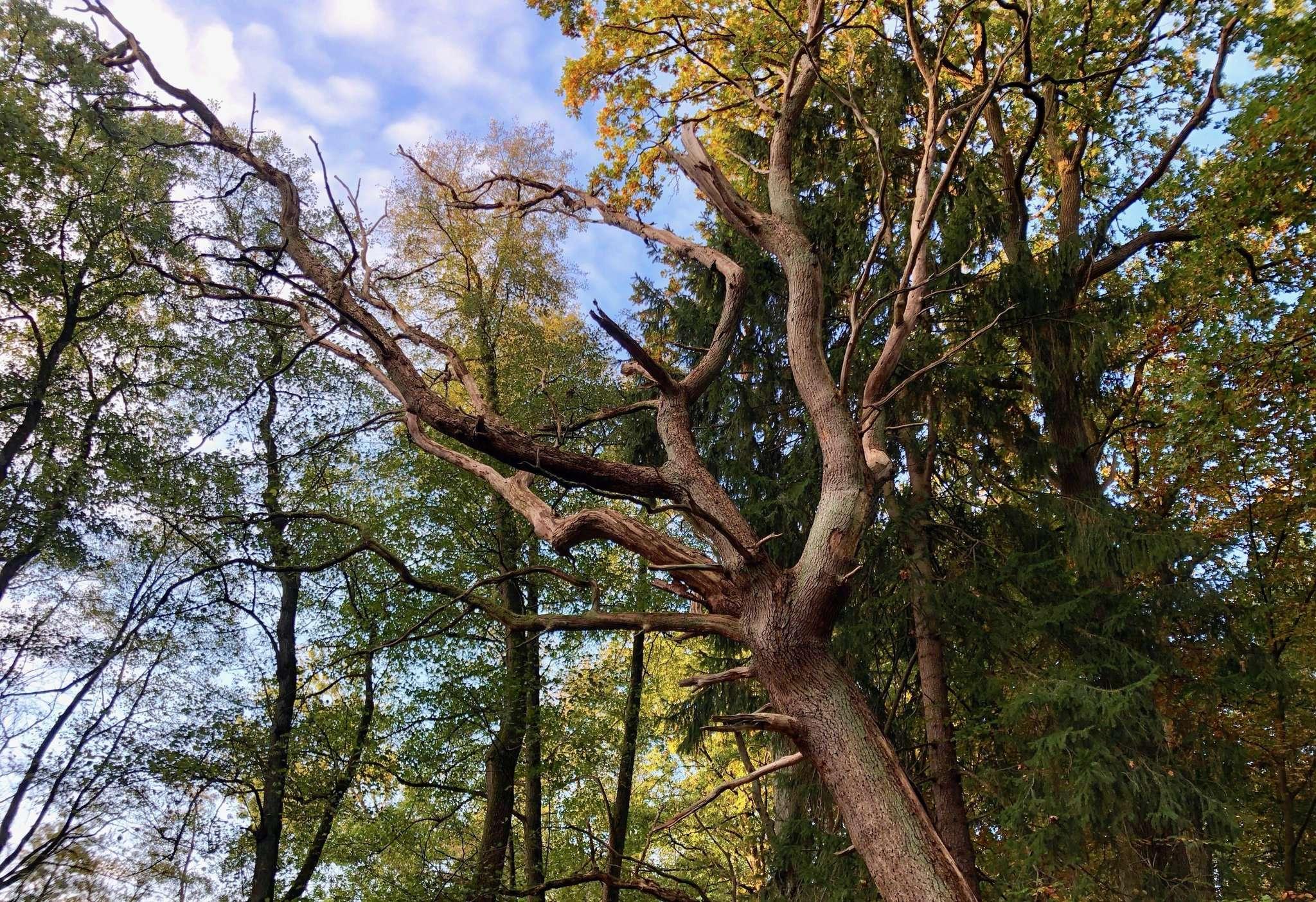 Immer mehr Bäume vertrocknen, das Klima wandelt sich - da ist auch von Seiten der Kommunen eigenes Engagement gefragt. Foto: Judith Tausenfreund